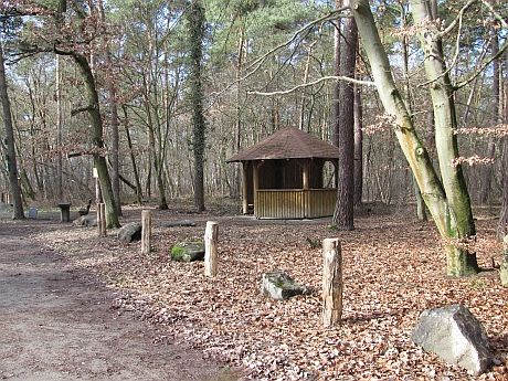Lampertheimer Wald